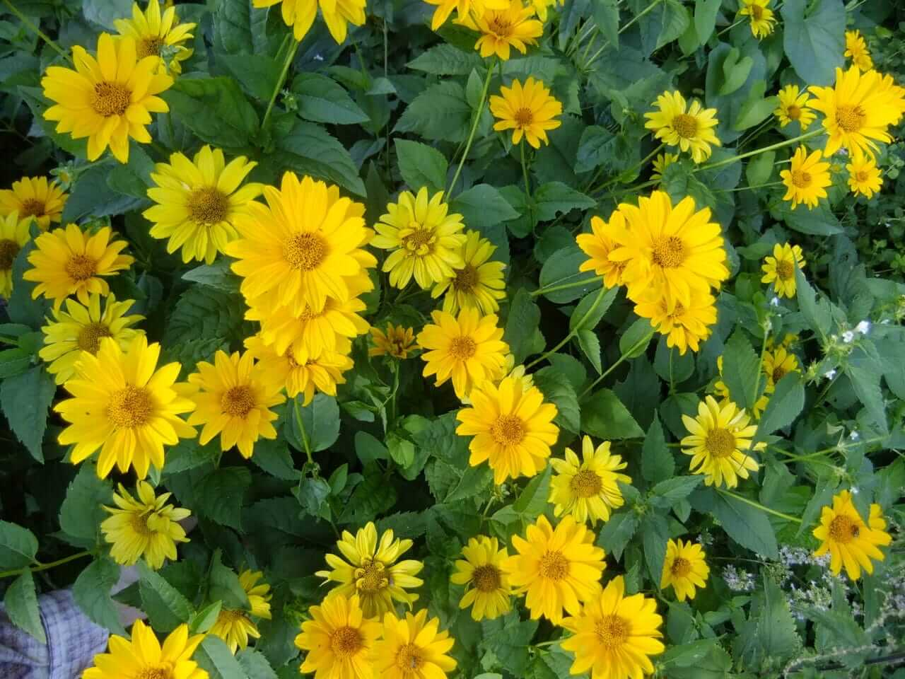 gro e liste mit nektarpflanzen f r bienen und hummeln die netz lupe. Black Bedroom Furniture Sets. Home Design Ideas