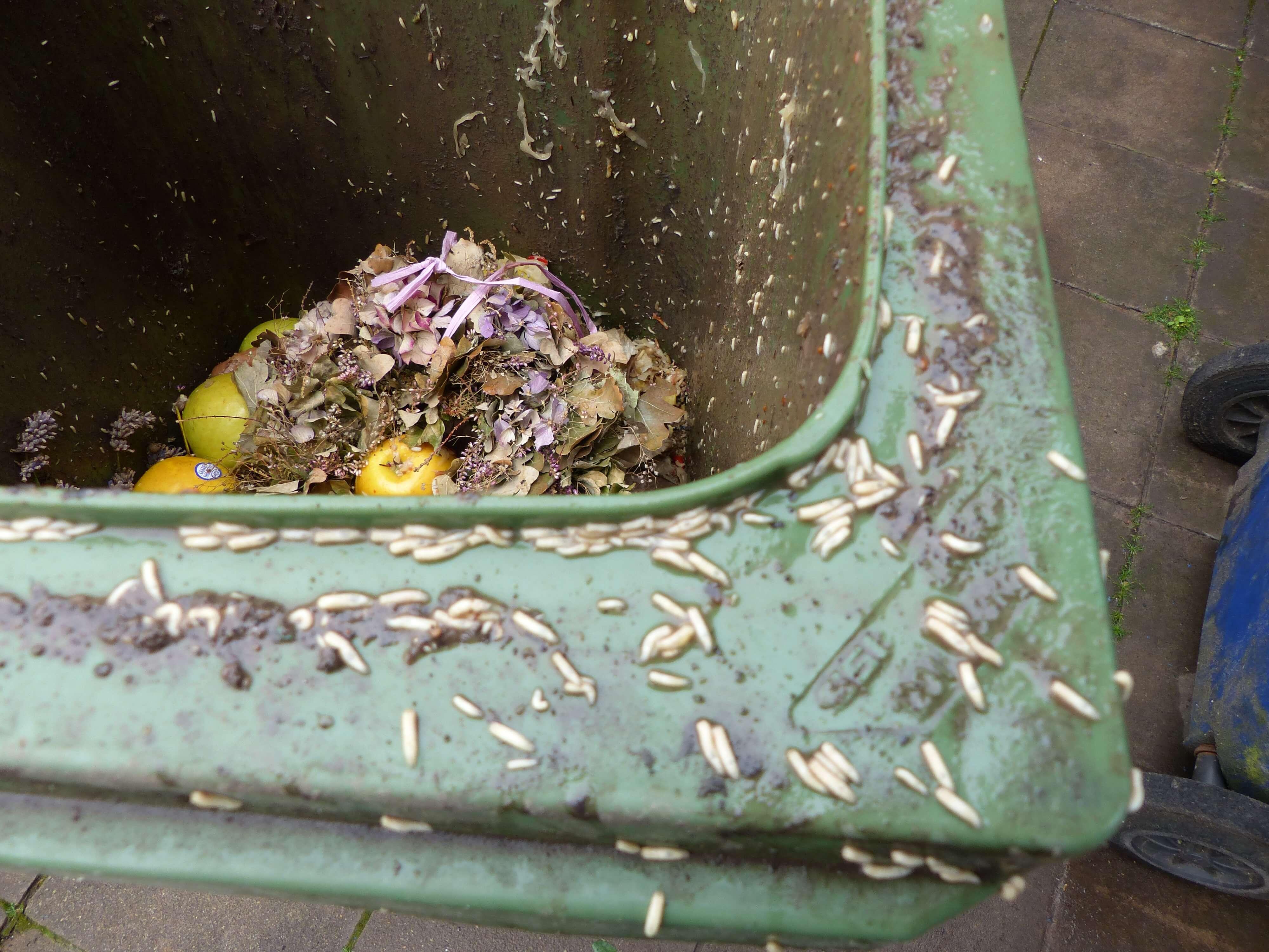 Was hilft gegen Maden in der Mülltonne?