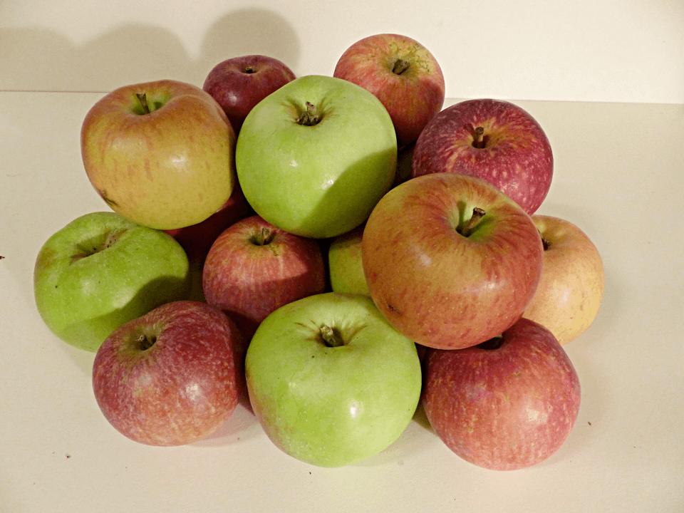 Taschengeld verdienen mit Äpfeln – So wird's gemacht!