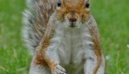 Wie kann ich Eichhörnchen in den Garten locken